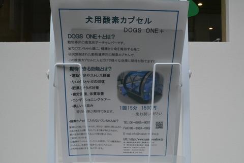 DSC_2435