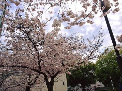 4月2日東中浜公園メロンパン