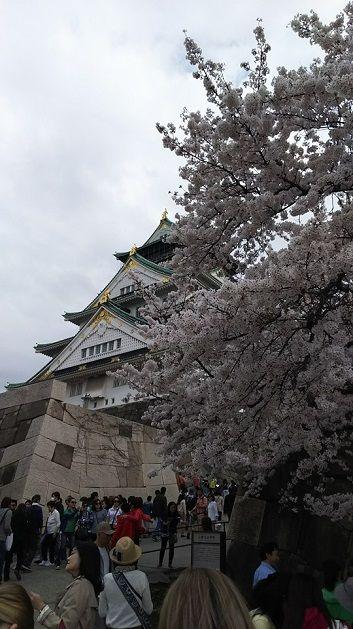 4月2日大阪城天守閣らへん満開亀間さん