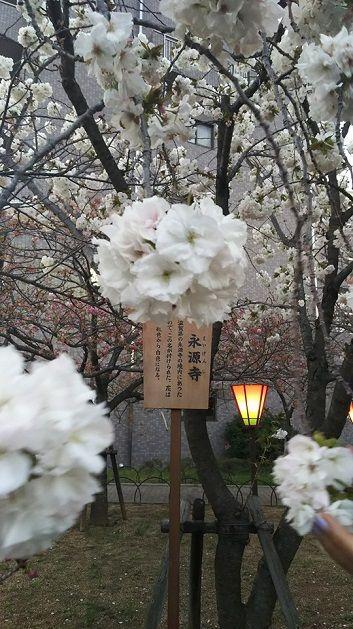 4月8日造幣局亀間さん