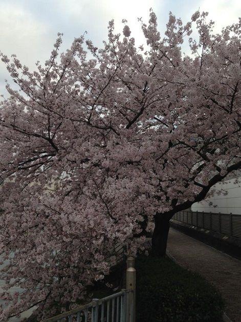 4月5日城北運河