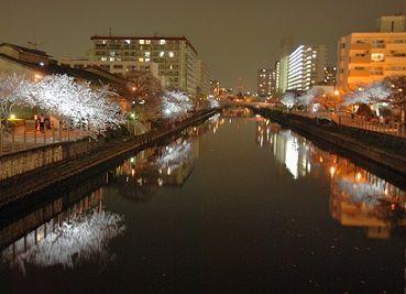 城北川夜桜ライトアップ1
